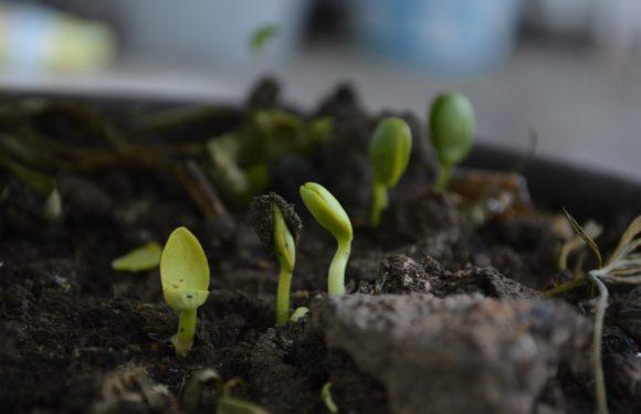 Как убить паразита лямблии на зараженной почве?